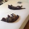 猫と暮らす間取り設計と家具選び