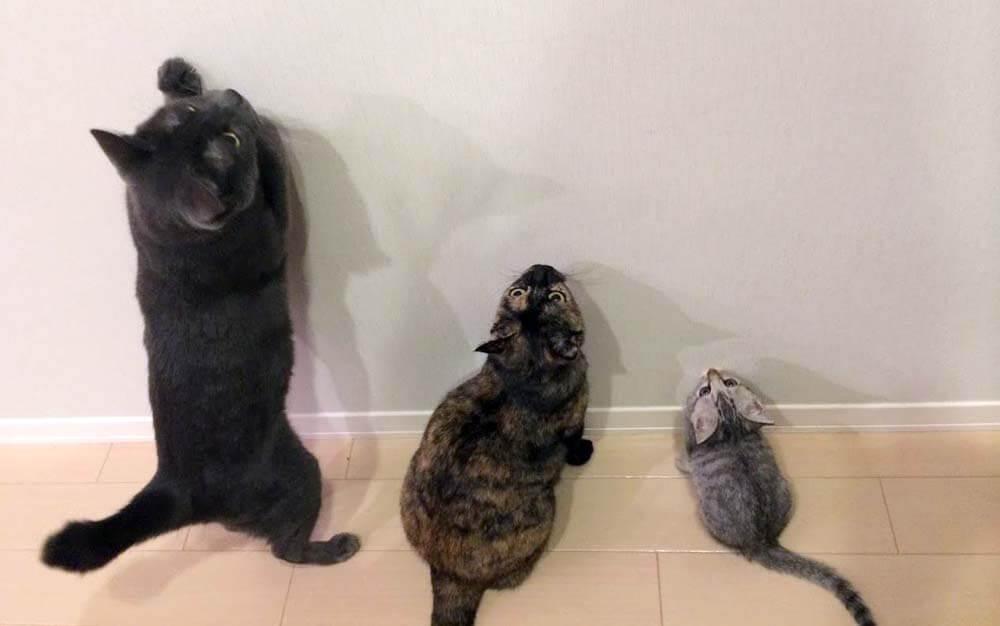 我が家の3匹の猫