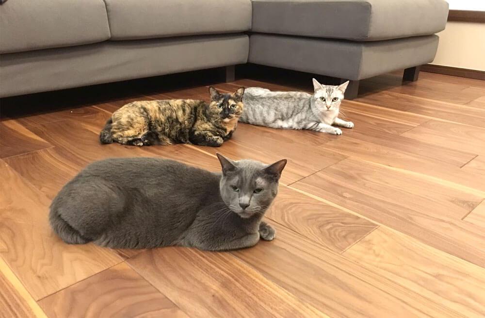 床のキズつけ職人、猫3匹